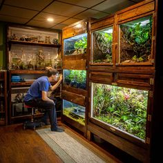 reptile cage in living room Exotic Pets - Reptiles Aquarium Terrarium, Terrariums, Wall Terrarium, Fish Tank Terrarium, Terrarium Reptile, Aquarium Fish Tank, Reptile Cage, Reptile Room, Reptile Enclosure
