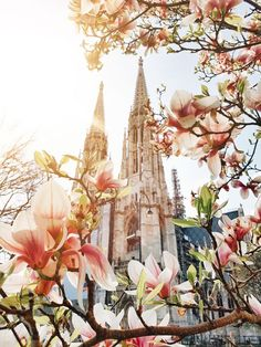 ViennaMagnoliaBlossoms