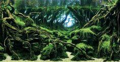 Es gibt da draussen Menschen, die ihr Aquarium zu einem wahren Meisterwerk aufpeppen. Diese Menschen messen ihr können dabei auch am International Aquatic Plants Layout Contest und nachfolgend seht ihr gleich den diesjährigen Gewinner, plus einige weitere Teilnehmer, die mir gefallen haben. Den Rest könnt ihr im IAPL-Flickr-Stream bestaunen .