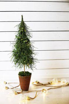 Tee tyylikäs kuusi ikivihreistä Christmas Crafts, Plants, Plant, Planets