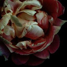 Bashful Beauty - Limited edition photography by Ashley Woodson Bailey