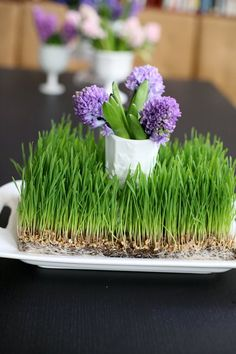 My Mom always starts growing grass in the kitchen around this time of year for flowers and eggs at Easter. Nice to have your own patch of green in the whiteout of winter. Wedding Flower Inspiration, Wedding Flowers, Wedding Ideas, Grass Decor, Growing Grass, Easter Stuff, Wheat Grass, Easter Decor, Special Day
