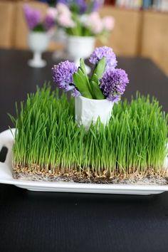 Wheat grass and hyacinths