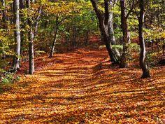 Gepind van kepguru Fall Photos, Country Roads, Van, Autumn, Autumn Photos, Fall Season Pictures, Fall Season, Fall, Vans