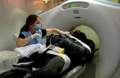 A technician monitors the heart of Rafiki, a 25-year-old silverback lowland gorilla, during a CT scan at the Cheyenne Mountain Zoo in Colorado Springs, Colorado on Sept. 2, 2009.  An all volunteer medical team operated on the gorilla on Sept. 5, to remove an infection from a bone behind his right ear. He has since recovered to normal health