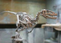 Deinonychus par Jason Brougham.
