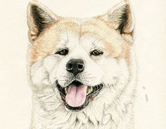 """Check out new work on my @Behance portfolio: """"Hachi"""" http://be.net/gallery/36164381/Hachi"""