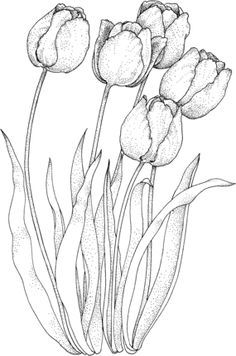 Click to see printable version of Four Tulips coloring page
