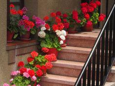 Un piccolo giardino in città balconi fioriti