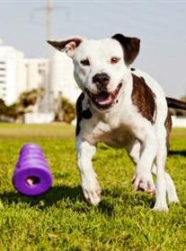 Learn how outdoor time with your dog can shake up both of your exercise routines.