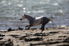 What an awsome picture! Galloping in freedom on the beach! #Jupinkle