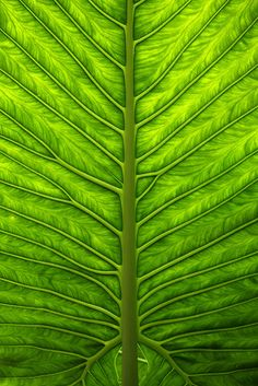 One giant leaf | Flickr - Photo Sharing!