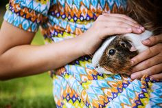 There's nothing better than quality guinea pig cuddles.