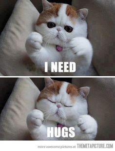 Me too kitty, just not from you because I'm allergic.