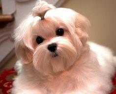 Sweet little face. What a little angel!
