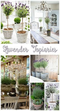 On Lavender Topiaries. Tips and Inspiration for Prettily Potted Lavender Crushing on Lavender Topiaries - tips, inspiration, source info for potting indoors!Crushing on Lavender Topiaries - tips, inspiration, source info for potting indoors! Indoor Garden, Indoor Plants, Outdoor Gardens, Farmhouse Homes, Farmhouse Style, Cottage Farmhouse, Rustic Farmhouse, Dream Garden, Home And Garden