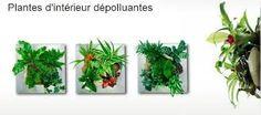 """Résultat de recherche d'images pour """"deco vegetale interieur"""""""