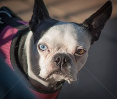dogs eyes - Google Search