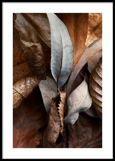 – Photograph with close up of brown and grey autumn leaves Gallery walls | Wall art inspiration | Desenio.co.uk Autumn Nature, Warm Autumn, Autumn Leaves, Gold Poster, Personalised Posters, Buy Posters Online, America And Canada, Dry Leaf, Inspirational Wall Art