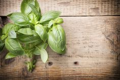 10 temperos naturais que podem substituir o sal na cozinha