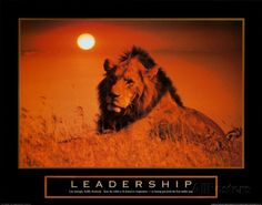 leadership-lion.jpg (473×371)
