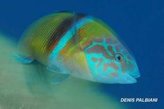 Immersioni all'Isola d'Elba con Elbadivers Dive Center Naregno. Scuba diver, immersions, Italy, Tuscany