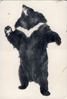 bear postcard