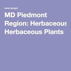 MD Piedmont Region: Herbaceous Plants Piedmont Region, Howard County, Native Plants, Landscape Design, Gardening, Landscape Designs, Garten, Lawn And Garden, Garden
