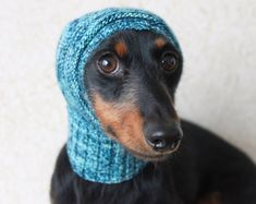 Lucky Fox Knits by LuckyFoxKnits on Etsy Dachshund Clothes, Mini Dachshund, Pet Clothes, Fancy Hats, Dog Sweaters, Pets, Small Dogs, Lana, Knitting Patterns