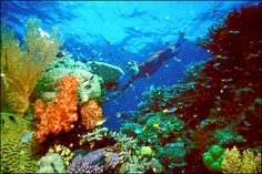 Great Barrier Reef (1 of the 7 natural wonders of the world)