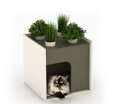 litiere chat decorative