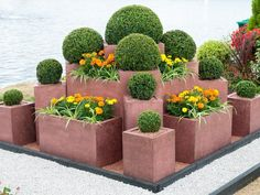 modular square pots with boxwood create funky look