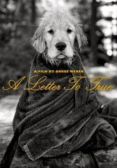 "ART-HOUSE FILM! BRUCE WEBER'S ""A Letter to True"" (2004) 
