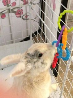 How to Make Homemade Rabbit Toys for When You Are Away