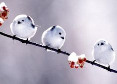 cute little birds. Cute Birds, Pretty Birds, Beautiful Birds, Animals And Pets, Baby Animals, Funny Animals, Cute Animals, Nature Story, Tiny Bird