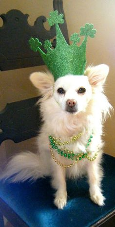 lots of DIY ideas for pets Little Dogs, Big Dogs, Dog Love, Puppy Love, St Patricks Day Hat, Saint Patricks, Diy Dog Costumes, Pet Style, St Paddys Day