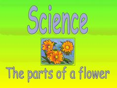 Science - The Parts of a Flower Presentation for - Grade Parts Of A Flower, Parts Of A Plant, Lesson Planet, Soft Heart, Instructional Strategies, Flowers Delivered, Planting Flowers, Presentation, Science