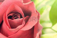 Vintage red rose #microstockphotographs #microstockphotowebsite #microstockphotography #microstockphotowebsites #marketingonline #microstock #marketing #webdesign #design #designaneolife #ecommerceur #fastudio #SEO #web20 #job #csstemplates #css #html #html5 #html5css3