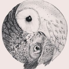 Owl yin and yang