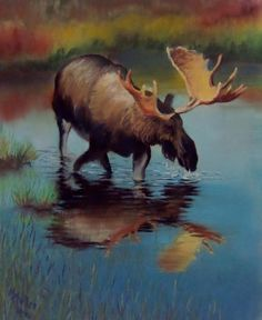 Moose Pastel by Marcus Moller - Moose Fine Art Prints and Posters for Sale