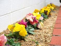 2014年3月18日(火) おはようございます!ホームセンターの園芸用品コーナーが、色鮮やかになってきた今日この頃。春の訪れと共に店先の花壇を仕上げようかな~なんて考えています。花壇の完成と共に植えたパンジー、元気がないのは土のせいかな!?まずは観葉植物用の土へ入れ替えることから始めようと思います(^^  それでは、今日も皆様にとって良い1日になりますように☆ 【加古川・藤井質店】http://www.pawn-fujii.jp/