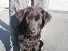 www.sddac.com  My name is ODIN.  I'm a neutered BLACK SPANIEL/BLEND. My age is 2 YEARS. My weight is 26 lbs. I'm in the Southern Region shelter.  My ID number is A1602582,  my necktag number is S636, and  my kennel number is SM11.