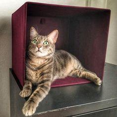 Kutu kutu kedi  #cat #kitty