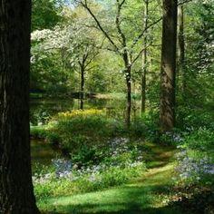 Woodland garden - mown pathways