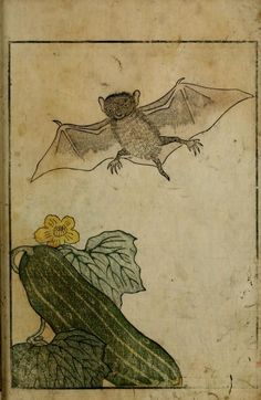 Yama no sachi. A book consisting mainly, but not entirely, of plant and insect illustrations. Japan. 1765.