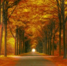 Tree Tunnel in Autumn, Germany | Spectacular Places