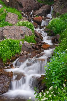 Wildflower Cascade Uncompahgre National Forest, Colorado