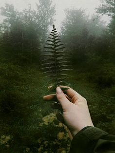 Repeating patterns start small and continue throughout nature.