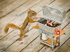 That's nuts! Wild squirrels pose for charming pictures after photographer hides food around miniature props  Mail Online News UK