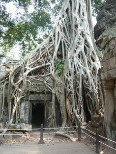 Visit to Ankor Wat - Cambodia.. It's simply amazing how these trees have grown as if they part of the structure!